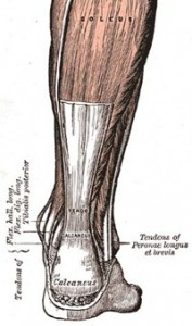 Achilles-tendon_thumb.jpg