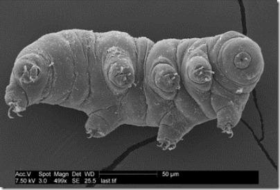 tardigrade-111202-02