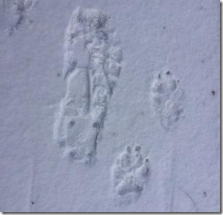 Me Jack Footprints